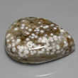 White Spotted Orbicular Jasper